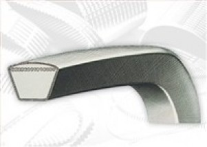 Cinghia trapezoidale sezione Z31 - lungh.interna 787 mm